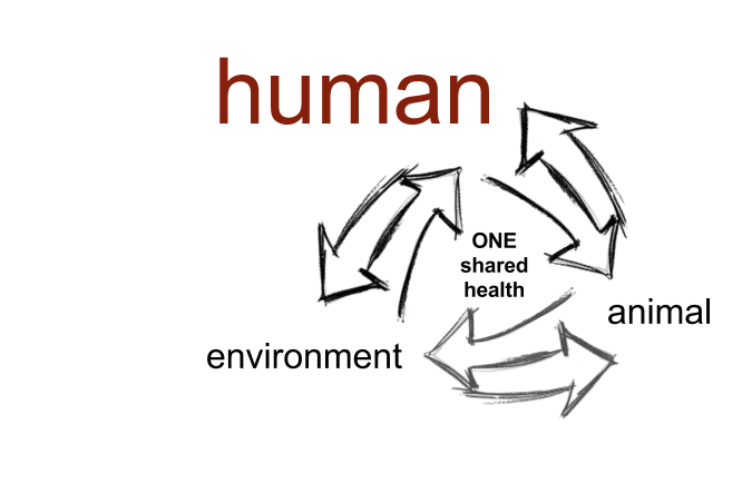 http://www.onehealthag.com/wp-content/uploads/2017/12/Shared-health.human1_.675x473.png